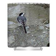 Gray Bird Shower Curtain
