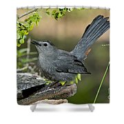 Gray Catbird Drinking Shower Curtain