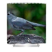Gray Catbird Dumetella Carolinensis Shower Curtain