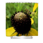 Gray Cone Flower Shower Curtain