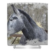 Old Gray Shower Curtain