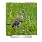 Gray-eyed Catbird II Shower Curtain