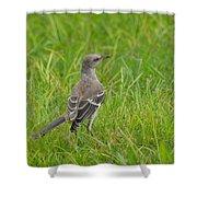 Gray-eyed Catbird Shower Curtain
