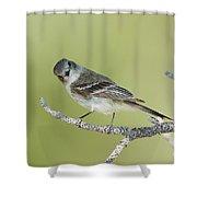 Gray Flycatcher Shower Curtain