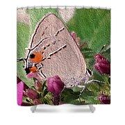 Gray Hairstreak Butterfly Shower Curtain