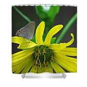 Gray Hairstreak Butterfly Shower Curtain