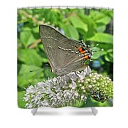 Gray Hairstreak Butterfly - Strymon Melinus Shower Curtain