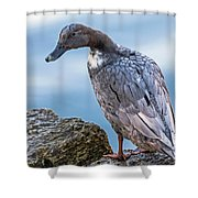 Gray Lady Shower Curtain