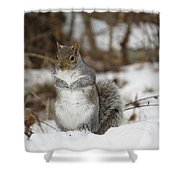 Gray Squirrel In Snow Shower Curtain