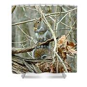 Gray Squirrel - Sciurus Carolinensis Shower Curtain