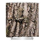 Gray Tree Frog Shower Curtain