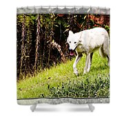 Gray Wolf 2 Shower Curtain
