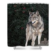 Gray Wolf Endangered Species Wildlife Rescue Shower Curtain