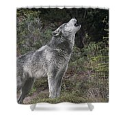 Gray Wolf Howling Endangered Species Wildlife Rescue Shower Curtain
