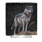 Gray Wolf On Hillside Endangered Species Wildlife Rescue Shower Curtain