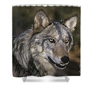 Gray Wolf Portrait Endangered Species Wildlife Rescue Shower Curtain