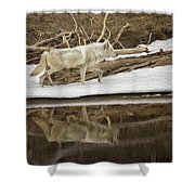 Gray Wolf Reflection Shower Curtain