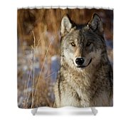 Gray Yearling Shower Curtain