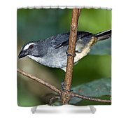 Grayish Saltator Shower Curtain