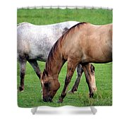 Grazing At Dusk Shower Curtain
