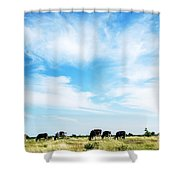 Grazing Cattle Shower Curtain