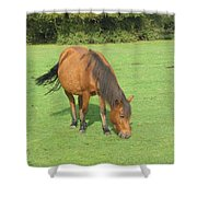 Grazing Chestnut Pony Shower Curtain