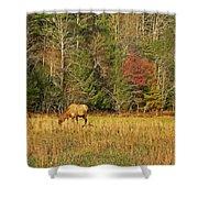 Grazing Elk Shower Curtain