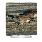 Grazing Geese Shower Curtain