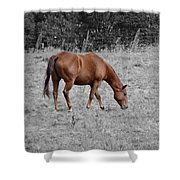 Grazing Horse Shower Curtain