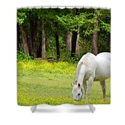 Grazing In Golden Fields Shower Curtain