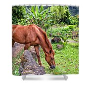 Grazing In Paradise Shower Curtain