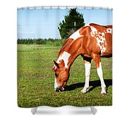 Grazing In Style Shower Curtain