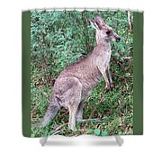 Grazing In The Grass Shower Curtain