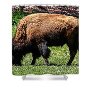 Grazing In The Grass Shower Curtain by Robert L Jackson