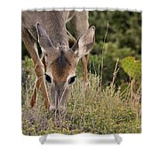 Grazing Oklahoma Shower Curtain