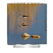 Grazing Stilts Shower Curtain