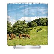 Grazing Summer Cows Shower Curtain