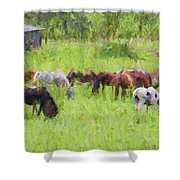 Grazing Trail Horses Shower Curtain