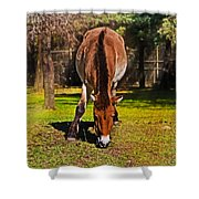 Grazing With An Attitude Shower Curtain