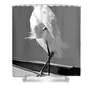 Great Beautiful Egret Shower Curtain