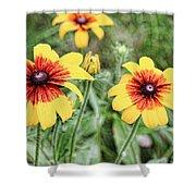 Great Blanket Flower Gaillardia Shower Curtain