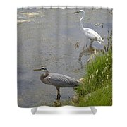 Great Blue And White Egrets Shower Curtain