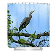 Great Blue Heron Afternoon Fishing  Shower Curtain