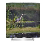 Great Blue Heron At Down East Maine Wetland Shower Curtain