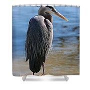 Great Blue Heron By Pond Shower Curtain