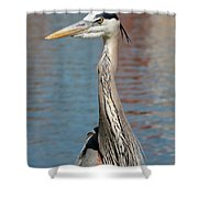 Great Blue Heron By The Water Shower Curtain