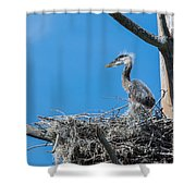 Great Blue Heron Chick Shower Curtain