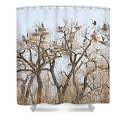 Great Blue Heron Colony Shower Curtain