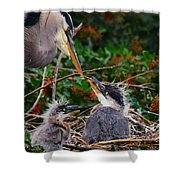 Great Blue Heron Family Shower Curtain