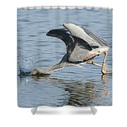 Great Blue Heron Fishing Shower Curtain